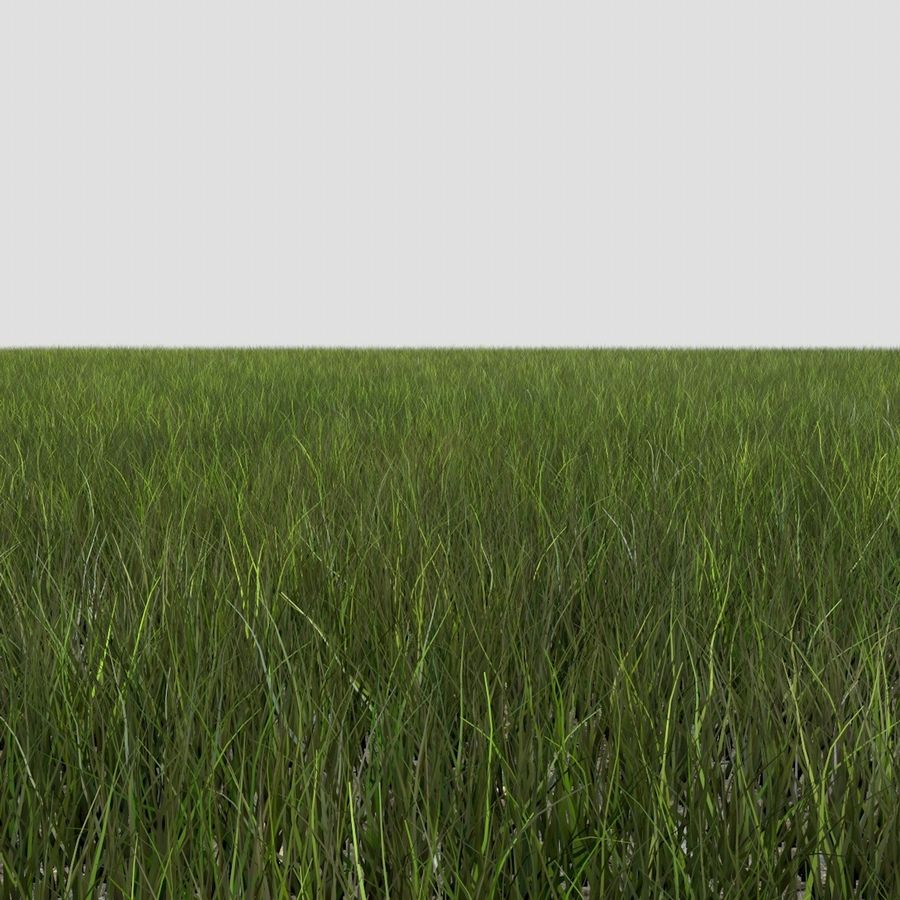 Dynamisch gras (1) royalty-free 3d model - Preview no. 5