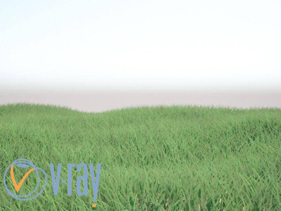 现实草(1) royalty-free 3d model - Preview no. 5