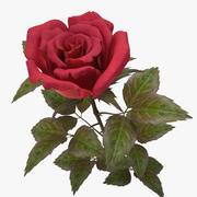 rose red_v_2 3d model
