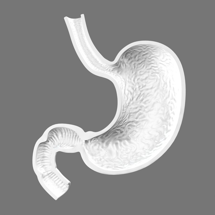 Stomach anatomy royalty-free 3d model - Preview no. 9