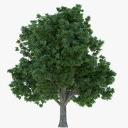 Drzewo starszego pudełka 3d model