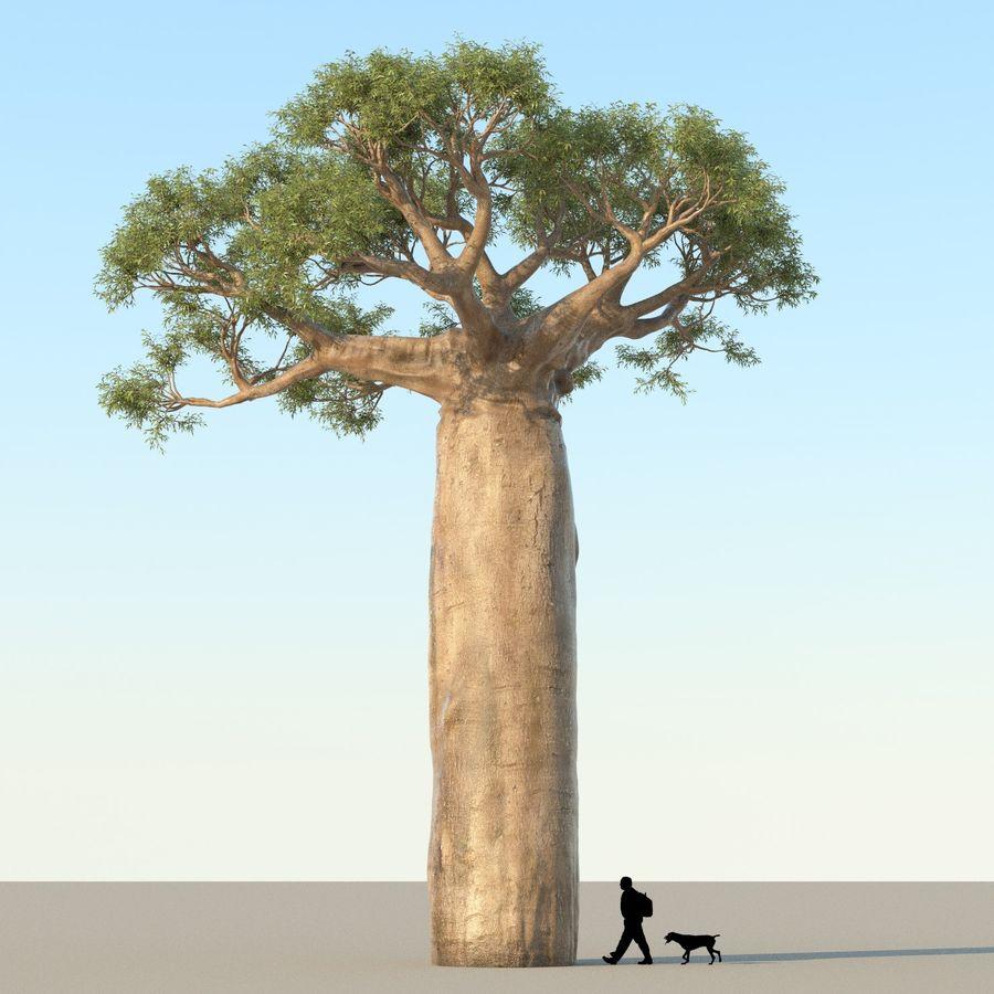 Baobab Tree 01 royalty-free 3d model - Preview no. 1