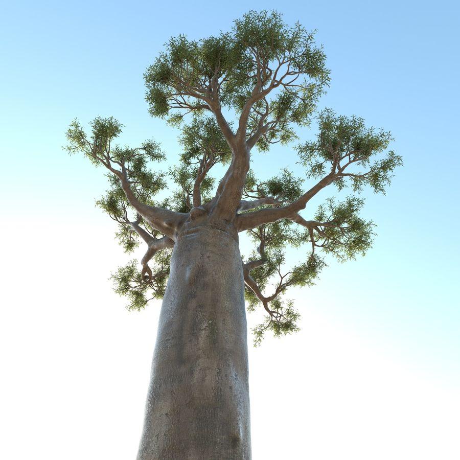 Baobab Tree 01 royalty-free 3d model - Preview no. 6