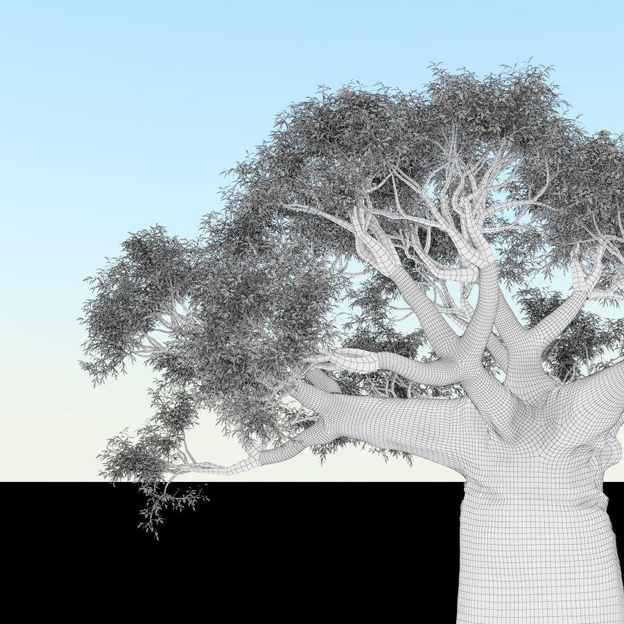 Baobab Tree 01 royalty-free 3d model - Preview no. 8