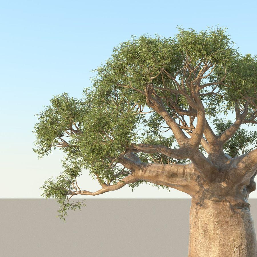 Baobab Tree 01 royalty-free 3d model - Preview no. 2