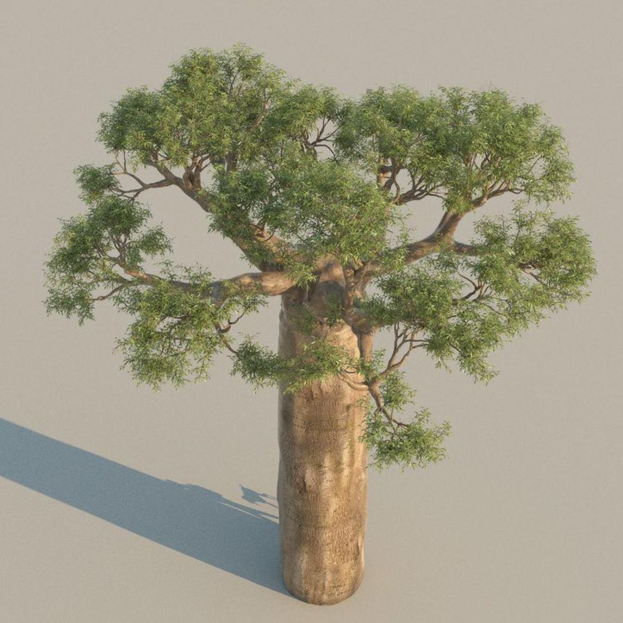 Baobab Tree 01 royalty-free 3d model - Preview no. 3