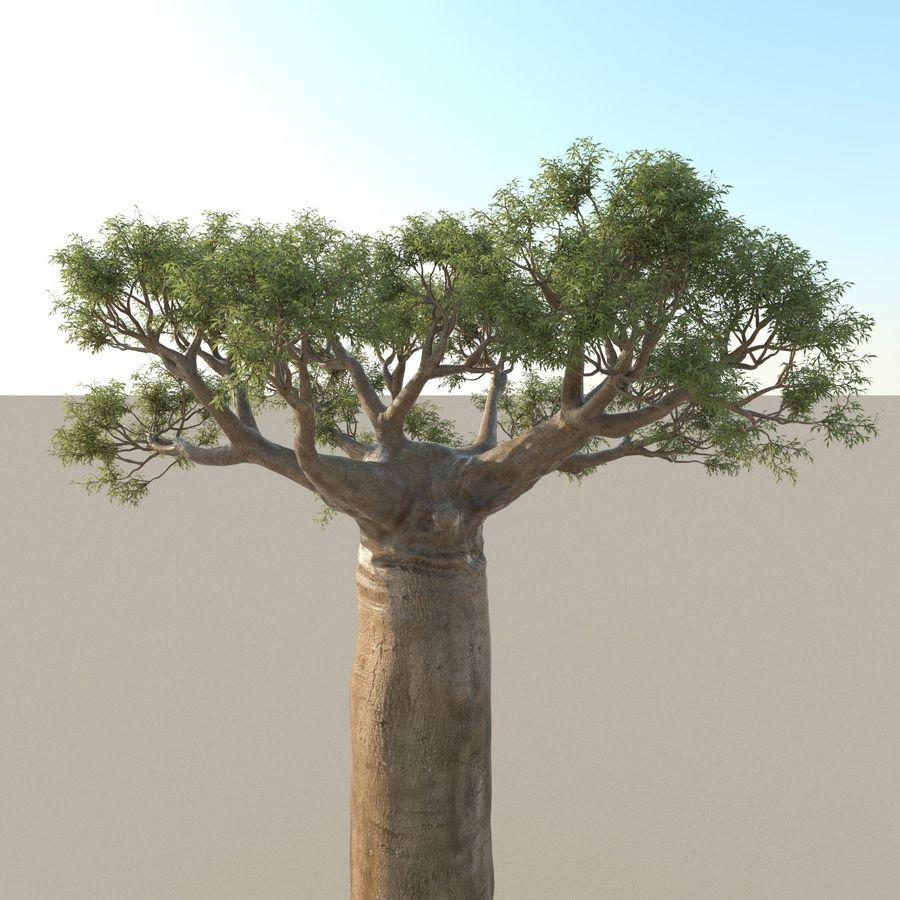 Baobab Tree 01 royalty-free 3d model - Preview no. 5