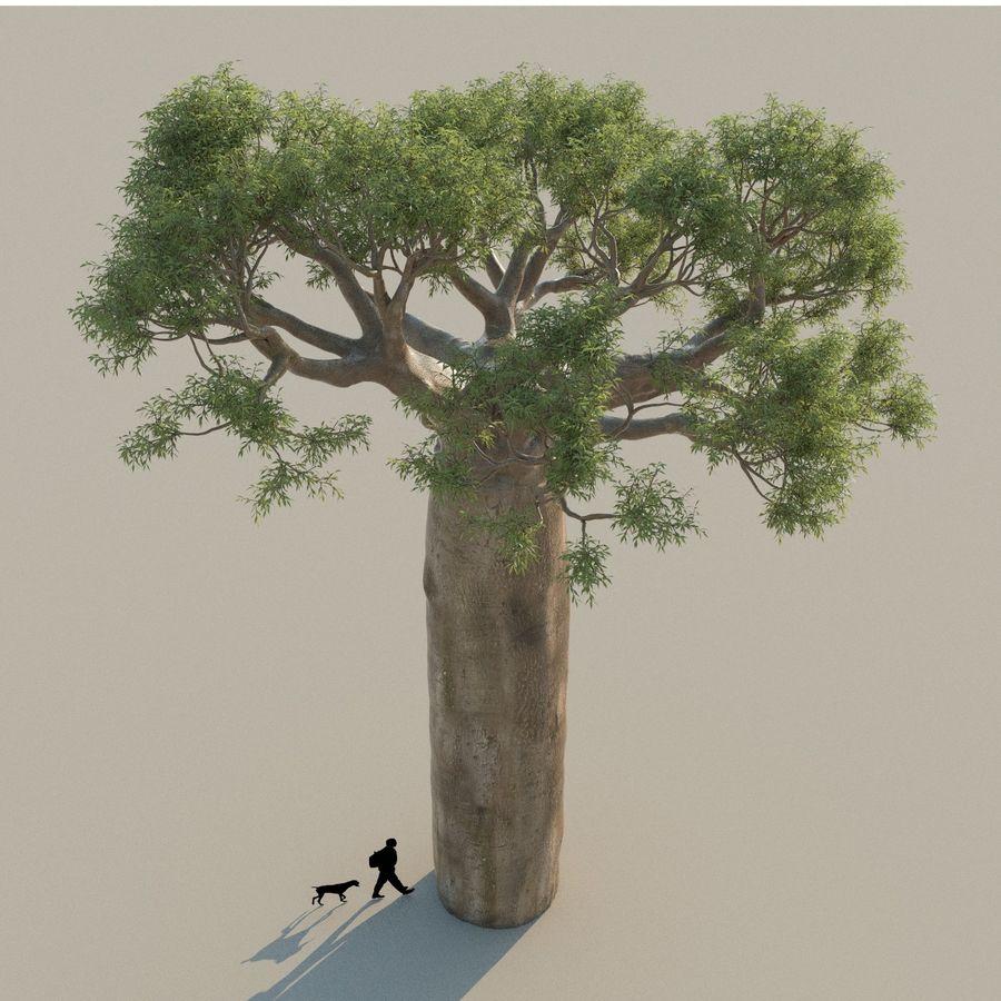 Baobab Tree 01 royalty-free 3d model - Preview no. 4
