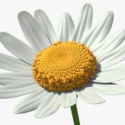 Arma Papatya Çiçeği 3d model