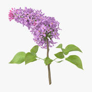 Lilac - Single Laying 3d model