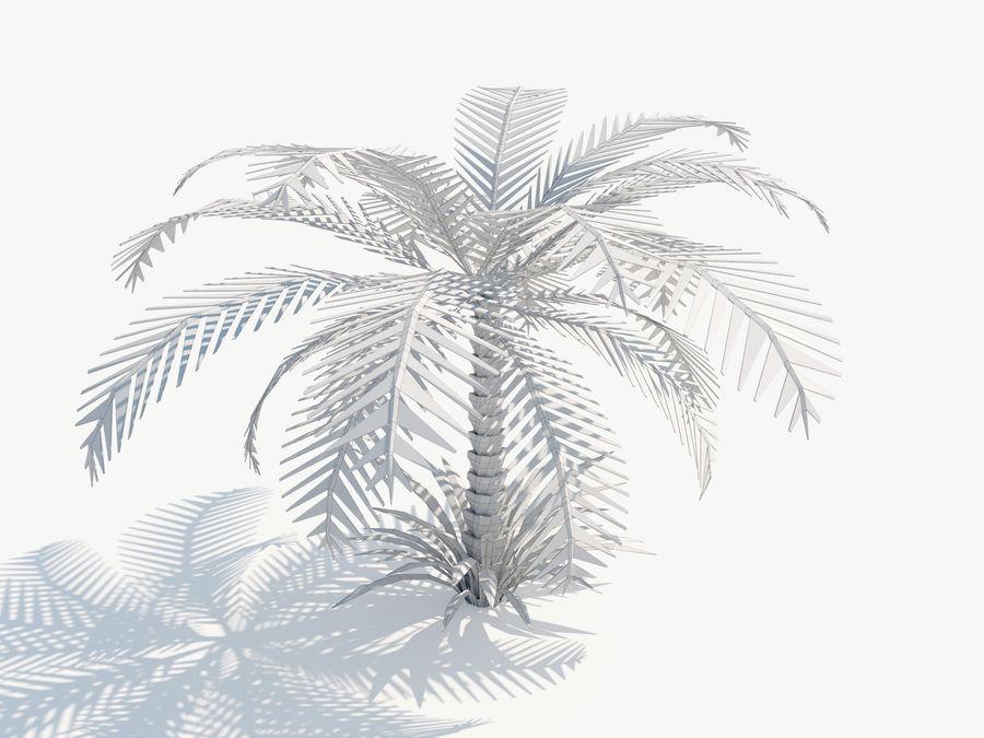 niskie drzewo palmowe Poly. Ożywiony royalty-free 3d model - Preview no. 5
