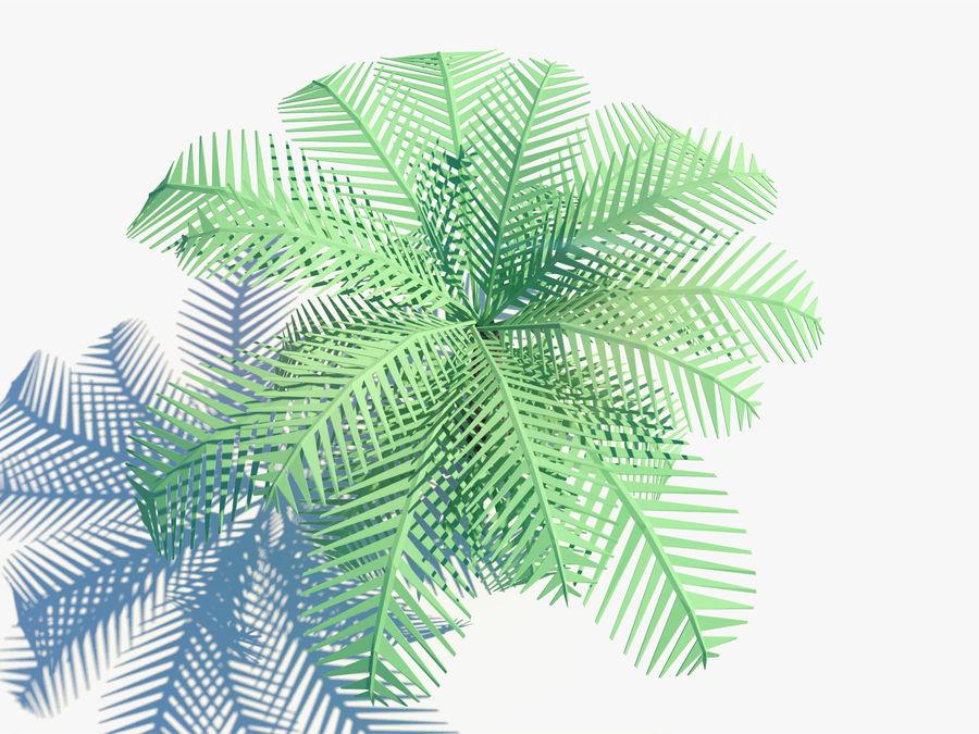 niskie drzewo palmowe Poly. Ożywiony royalty-free 3d model - Preview no. 3