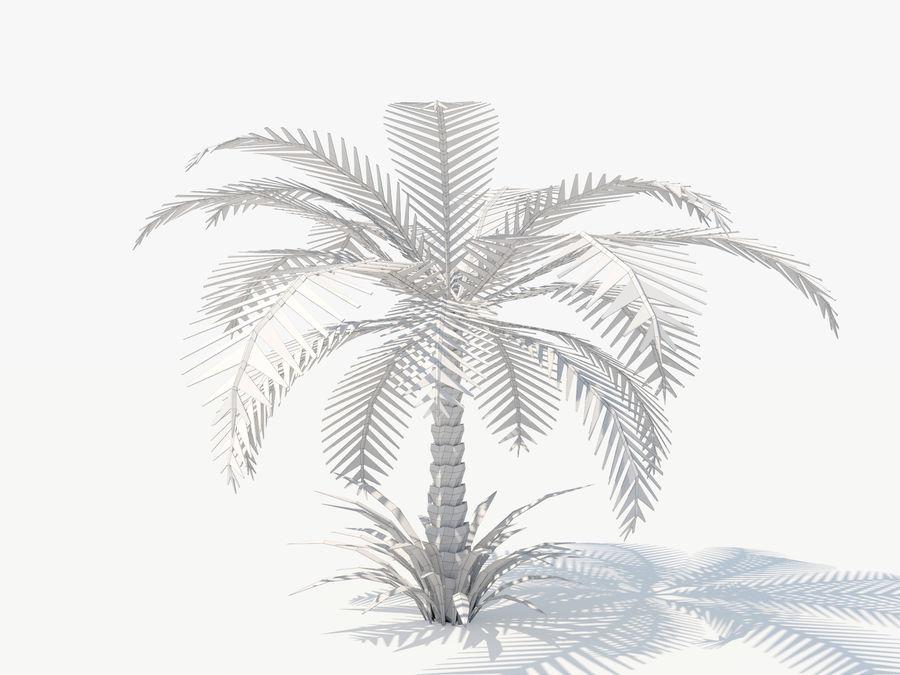 niskie drzewo palmowe Poly. Ożywiony royalty-free 3d model - Preview no. 4