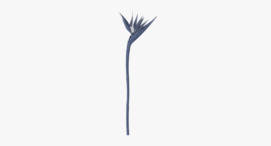 Bird of Paradise - Single Standing royalty-free 3d model - Preview no. 10