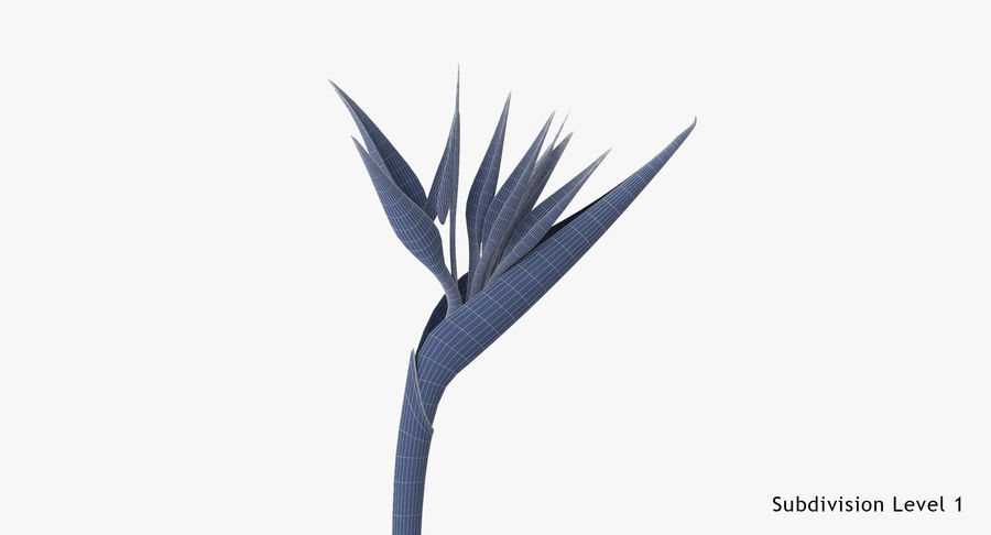 Bird of Paradise - Single Standing royalty-free 3d model - Preview no. 18