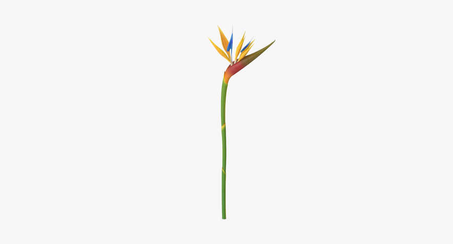 Bird of Paradise - Single Standing royalty-free 3d model - Preview no. 9