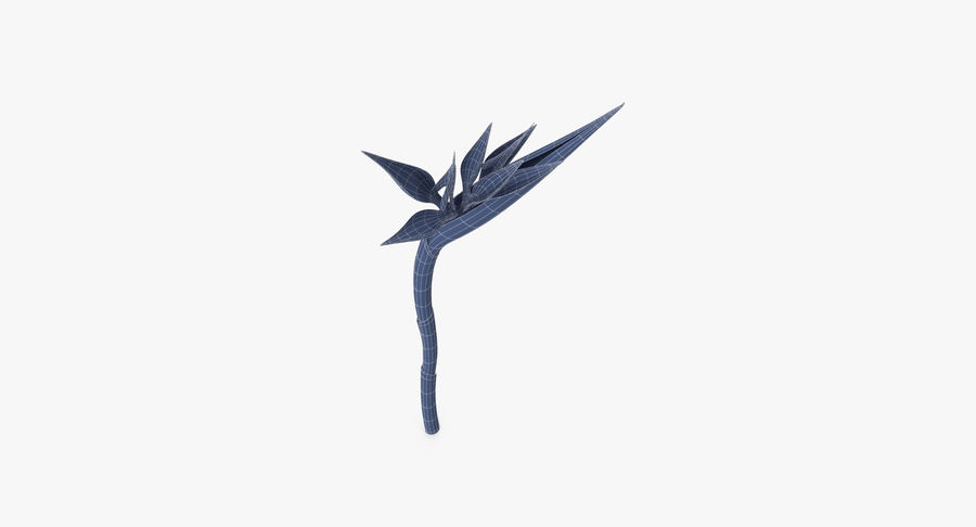 Bird of Paradise - Single Standing royalty-free 3d model - Preview no. 13