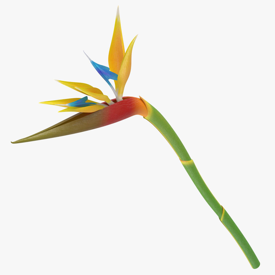 Bird of Paradise - Single Standing royalty-free 3d model - Preview no. 1