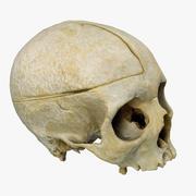 3D Scan Human Skull 3d model