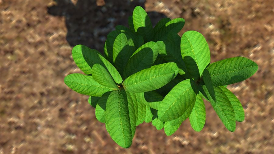 Plant herb royalty-free 3d model - Preview no. 2