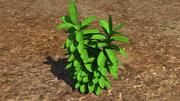 Planta de hierba modelo 3d