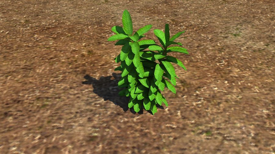 Plant herb royalty-free 3d model - Preview no. 4