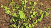 arbuste de la plante 3d model