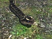 蛇爬行动物 3d model