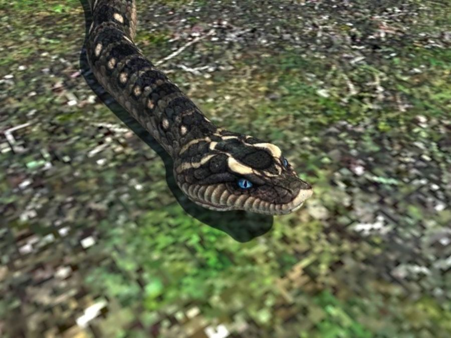 Snake reptile royalty-free 3d model - Preview no. 1