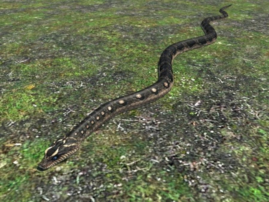 Snake reptile royalty-free 3d model - Preview no. 2