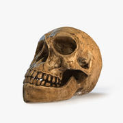 Kafatası 3d model