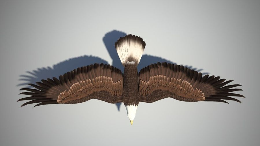 Eagle bird royalty-free 3d model - Preview no. 3
