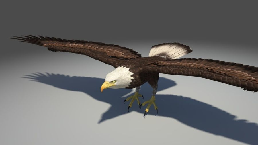Uccello aquila royalty-free 3d model - Preview no. 2