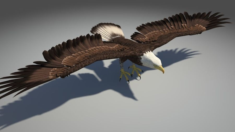 Uccello aquila royalty-free 3d model - Preview no. 1