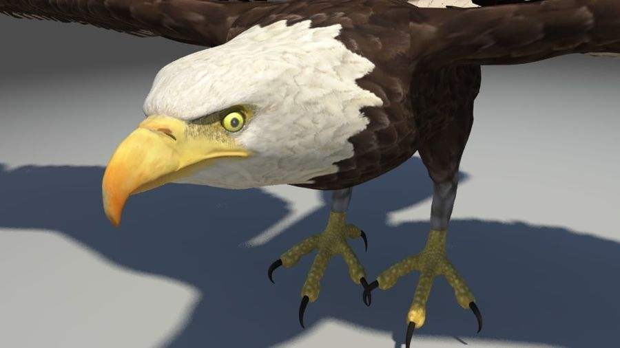 Uccello aquila royalty-free 3d model - Preview no. 6