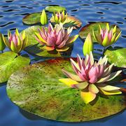 lilia wodna pink_v_2 3d model