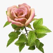 rose jaune-rose 3d model