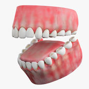 Teeth gum tongue 3d model