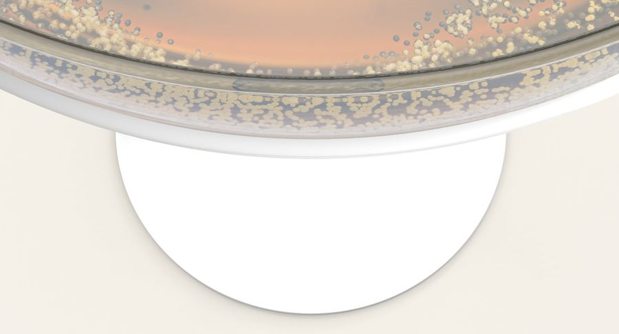Полное шампанское купе royalty-free 3d model - Preview no. 10