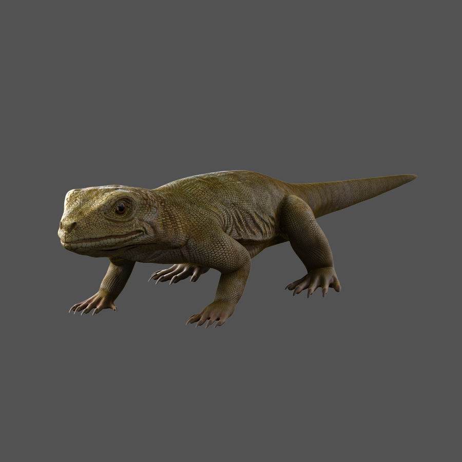 lizard_Rigged royalty-free 3d model - Preview no. 3