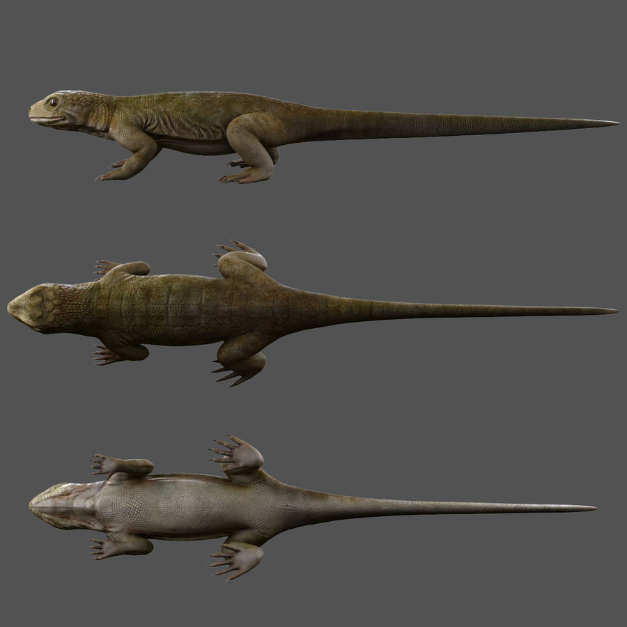 lizard_Rigged royalty-free 3d model - Preview no. 2