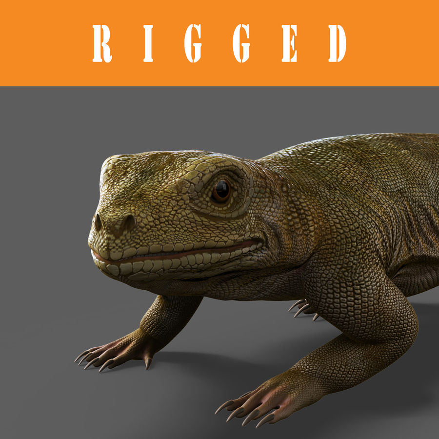 lizard_Rigged royalty-free 3d model - Preview no. 1