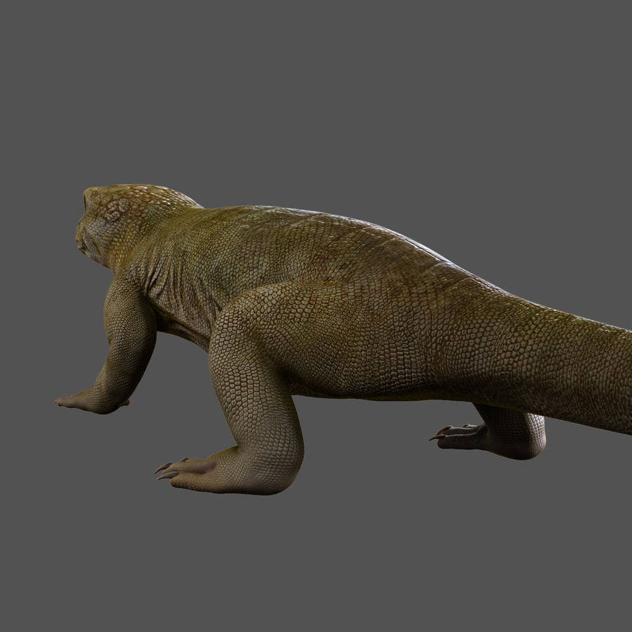 lizard_Rigged royalty-free 3d model - Preview no. 4