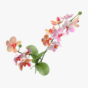 Orchid - Natural Group 3d model