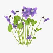 Violett - natürliche Gruppe 3d model