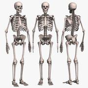 Skeleton Low Poly 3d model