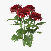 Chrysanthemenrot - Natürliche Gruppe 3d model