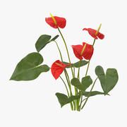 Anthurium - Natürliche Gruppe 3d model