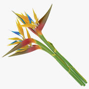 Bird of Paradise - Bouquet 3d model