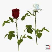 Roses 3D Modelsコレクション 3d model
